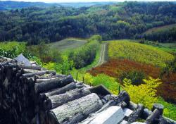 Piemonte Simei Gambero Rosso Bicchieri Vini Italia