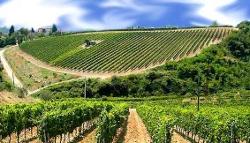 Bicchieri Vini Italia Sicilia